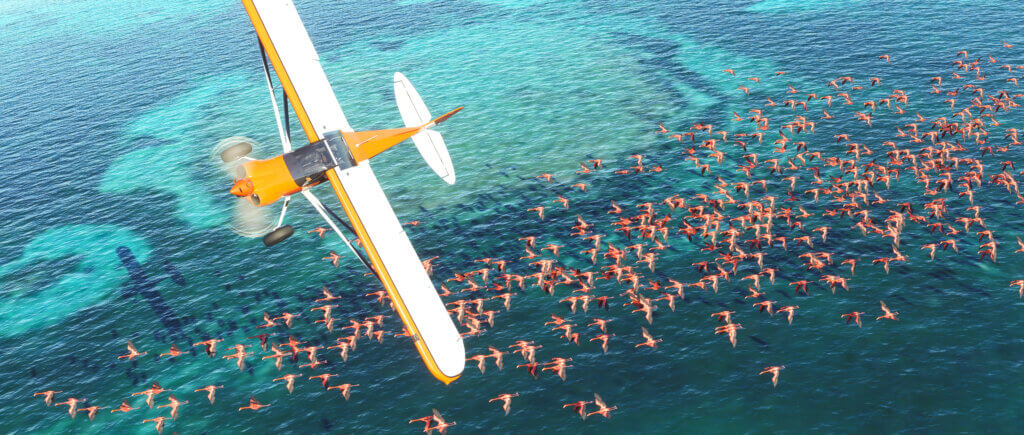 Plane flying over water and flamingos